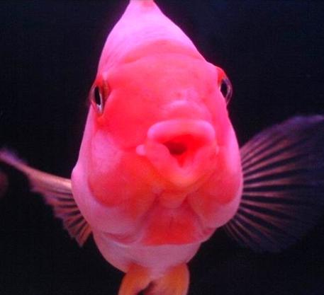 清理鱼缸的鱼种类_血鹦鹉怎么养比较好哪?-58同城