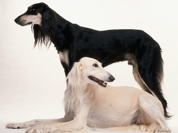 Black And White Dogs For Sale