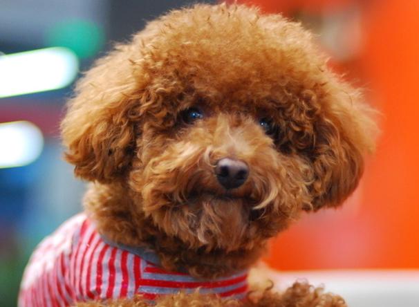 宠物狗名字 大全 (606x444)-宠物狗图片大全 狗狗品种大全及图片